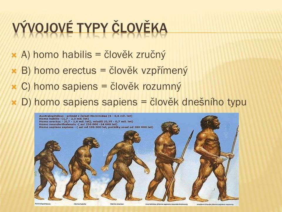 A) homo habilis = člověk zručný  B) homo erectus = člověk vzpřímený  C) homo sapiens = člověk rozumný  D) homo sapiens sapiens = člověk dnešního typu