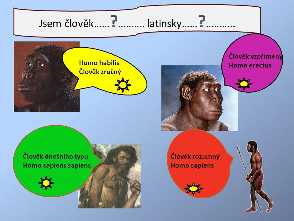Homo habilis Člověk zručný Člověk vzpřímený Homo erectus Člověk dnešního typu Homo sapiens sapiens Člověk rozumný Homo sapiens Homo habilis Člověk zručný
