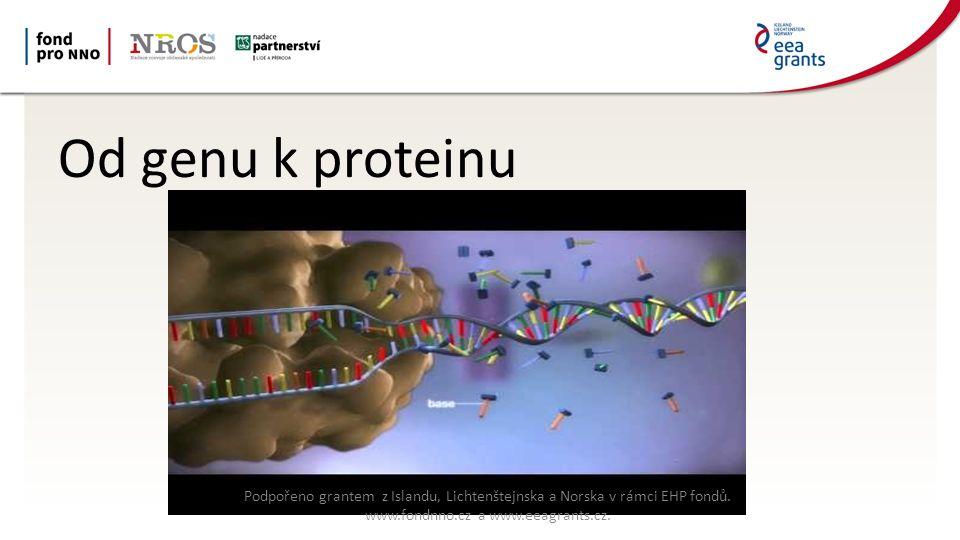Od genu k proteinu Podpořeno grantem z Islandu, Lichtenštejnska a Norska v rámci EHP fondů.