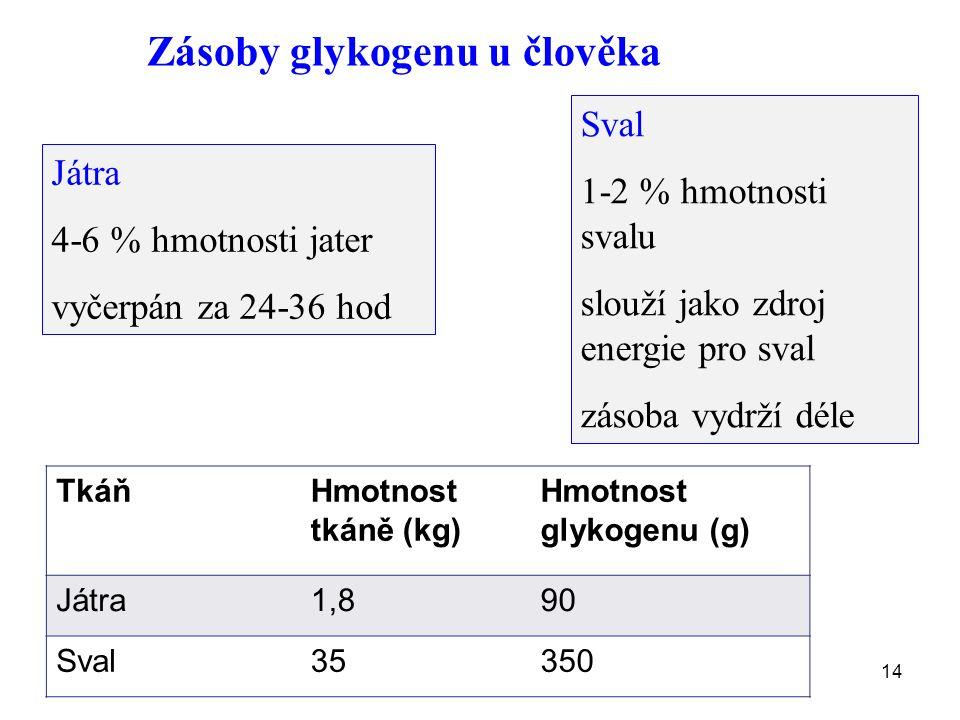14 Zásoby glykogenu u člověka Játra 4-6 % hmotnosti jater vyčerpán za 24-36 hod Sval 1-2 % hmotnosti svalu slouží jako zdroj energie pro sval zásoba vydrží déle TkáňHmotnost tkáně (kg) Hmotnost glykogenu (g) Játra1,890 Sval35350