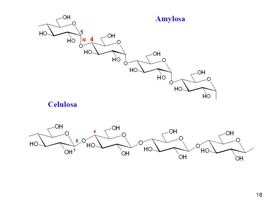 16 Amylosa Celulosa