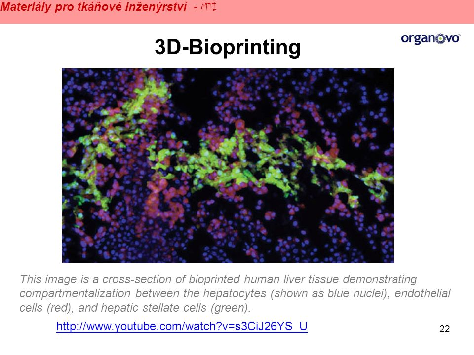 22 http://www.youtube.com/watch v=s3CiJ26YS_U 3D-Bioprinting This image is a cross-section of bioprinted human liver tissue demonstrating compartmentalization between the hepatocytes (shown as blue nuclei), endothelial cells (red), and hepatic stellate cells (green).