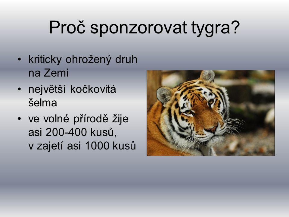 Proč sponzorovat tygra.