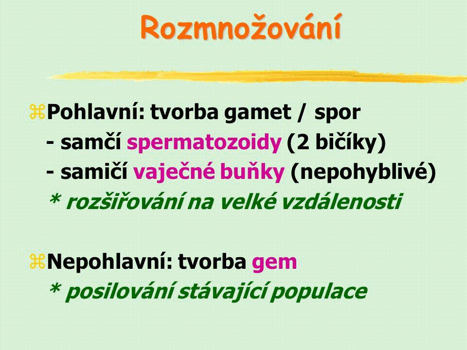 Rozmnožování zPohlavní: tvorba gamet / spor - samčí spermatozoidy (2 bičíky) - samičí vaječné buňky (nepohyblivé) * rozšiřování na velké vzdálenosti zNepohlavní: tvorba gem * posilování stávající populace