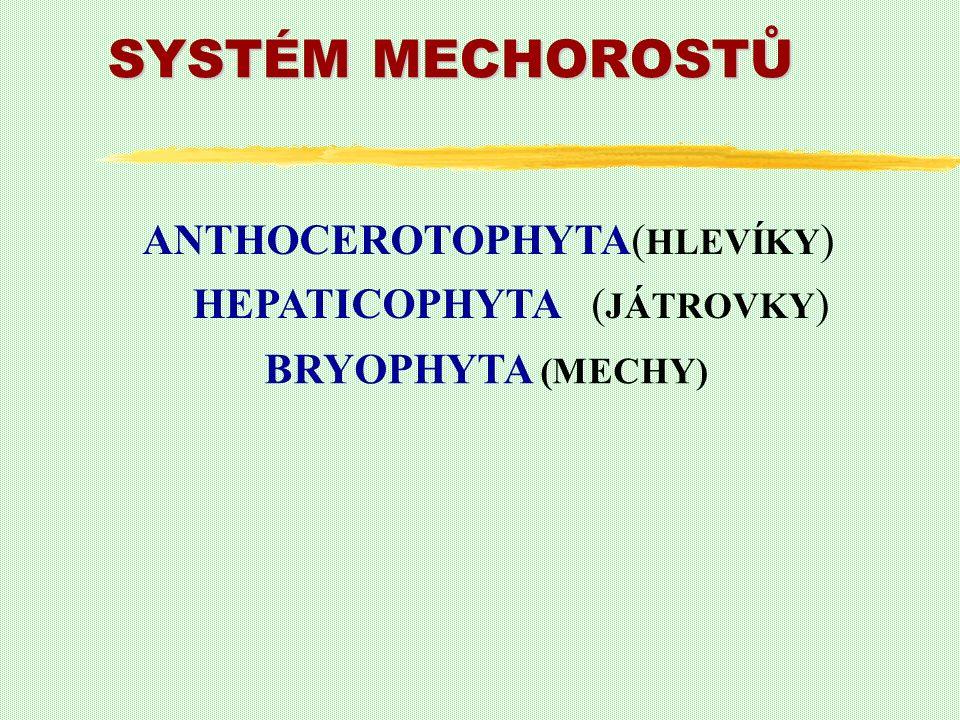 SYSTÉM MECHOROSTŮ HEPATICOPHYTA ( JÁTROVKY ) BRYOPHYTA (MECHY) ANTHOCEROTOPHYTA( HLEVÍKY )