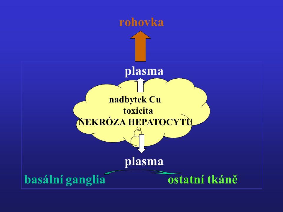 rohovka plasma plasma basální ganglia ostatní tkáně nadbytek Cu toxicita NEKRÓZA HEPATOCYTU
