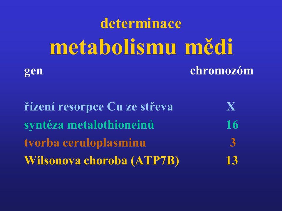 determinace metabolismu mědi gen chromozóm řízení resorpce Cu ze střeva X syntéza metalothioneinů 16 tvorba ceruloplasminu 3 Wilsonova choroba (ATP7B)