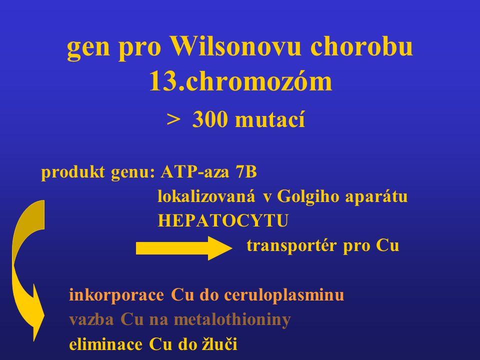 gen pro Wilsonovu chorobu 13.chromozóm > 300 mutací produkt genu: ATP-aza 7B lokalizovaná v Golgiho aparátu HEPATOCYTU transportér pro Cu inkorporace Cu do ceruloplasminu vazba Cu na metalothioniny eliminace Cu do žluči