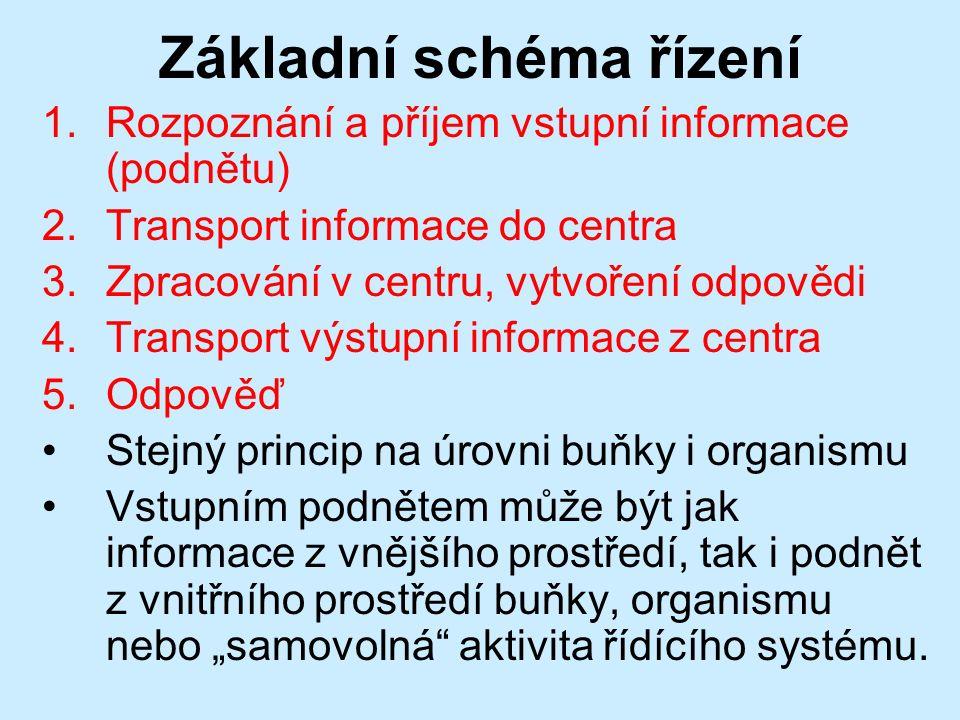 """Základní schéma řízení 1.Rozpoznání a příjem vstupní informace (podnětu) 2.Transport informace do centra 3.Zpracování v centru, vytvoření odpovědi 4.Transport výstupní informace z centra 5.Odpověď Stejný princip na úrovni buňky i organismu Vstupním podnětem může být jak informace z vnějšího prostředí, tak i podnět z vnitřního prostředí buňky, organismu nebo """"samovolná aktivita řídícího systému."""