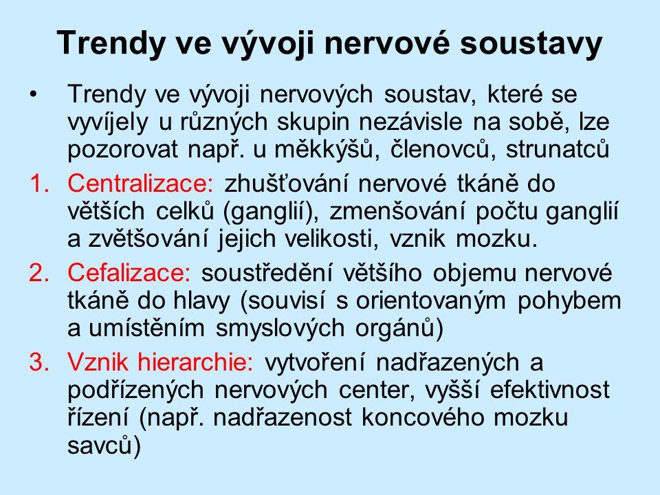 Trendy ve vývoji nervové soustavy Trendy ve vývoji nervových soustav, které se vyvíjely u různých skupin nezávisle na sobě, lze pozorovat např.