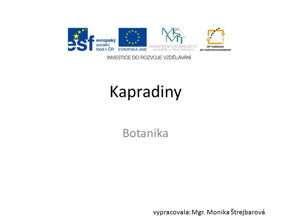 Kapradiny Botanika vypracovala: Mgr. Monika Štrejbarová