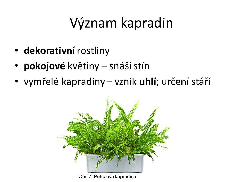 Význam kapradin dekorativní rostliny pokojové květiny – snáší stín vymřelé kapradiny – vznik uhlí; určení stáří Obr.