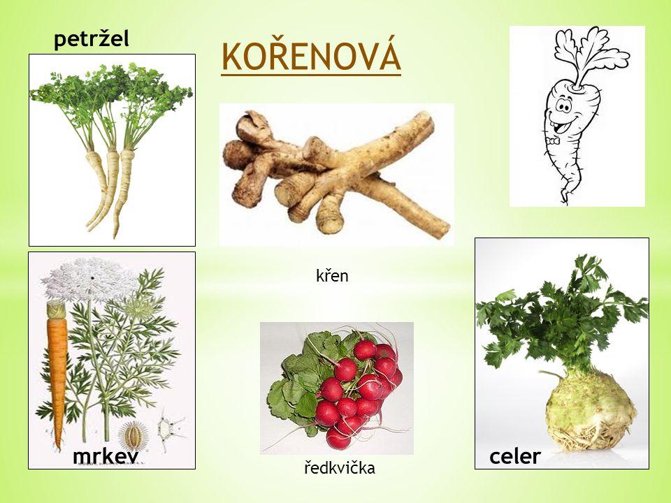 KOŘENOVÁ petržel mrkev křen ředkvička celer