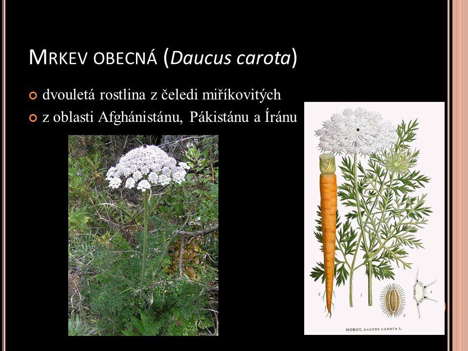 M RKEV OBECNÁ ( Daucus carota ) dvouletá rostlina z čeledi miříkovitých z oblasti Afghánistánu, Pákistánu a Íránu
