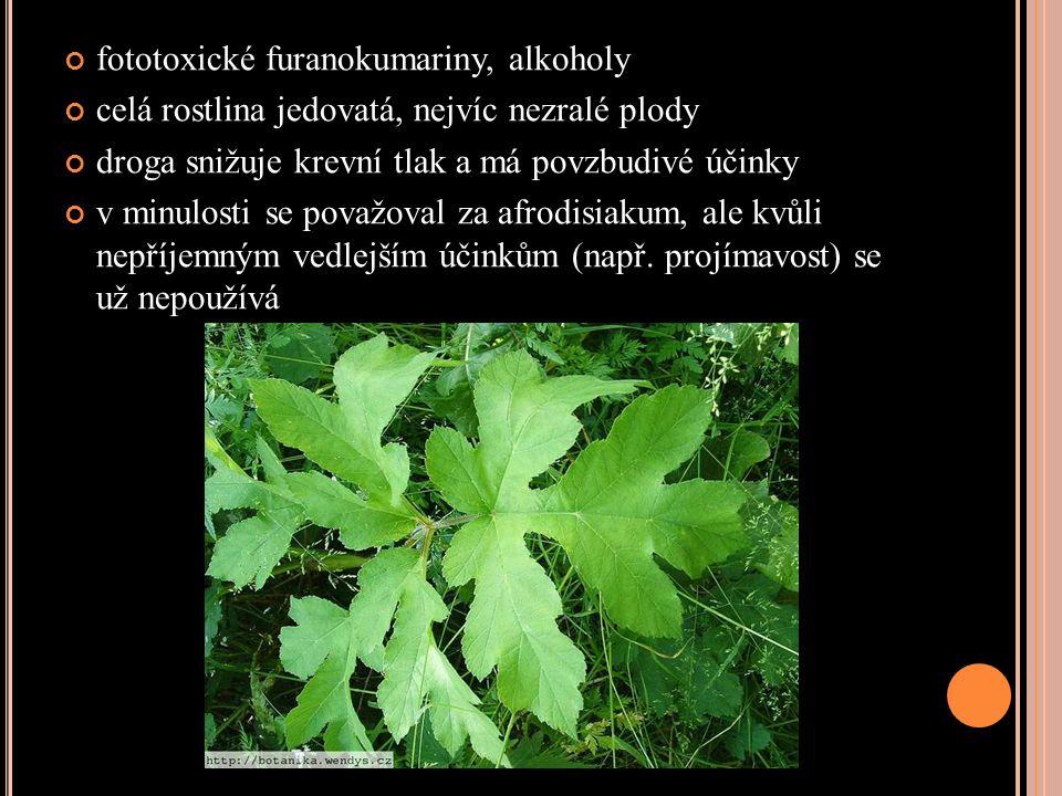 fototoxické furanokumariny, alkoholy celá rostlina jedovatá, nejvíc nezralé plody droga snižuje krevní tlak a má povzbudivé účinky v minulosti se považoval za afrodisiakum, ale kvůli nepříjemným vedlejším účinkům (např.