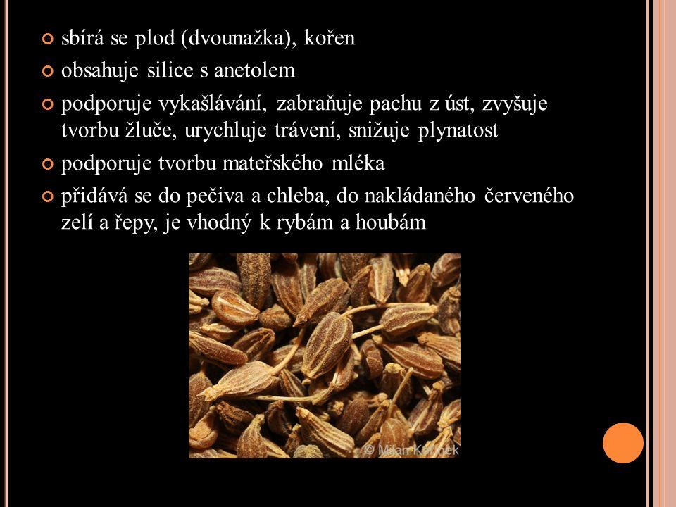 sbírá se plod (dvounažka), kořen obsahuje silice s anetolem podporuje vykašlávání, zabraňuje pachu z úst, zvyšuje tvorbu žluče, urychluje trávení, snižuje plynatost podporuje tvorbu mateřského mléka přidává se do pečiva a chleba, do nakládaného červeného zelí a řepy, je vhodný k rybám a houbám