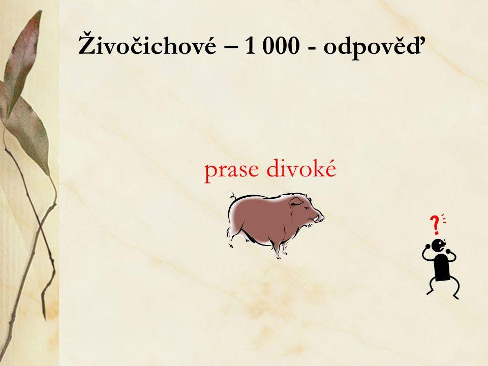 Živočichové – 1 000 - odpověď prase divoké