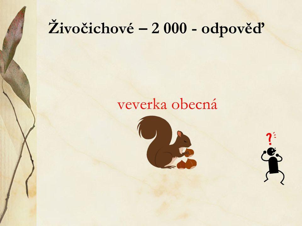 Živočichové – 2 000 - odpověď veverka obecná