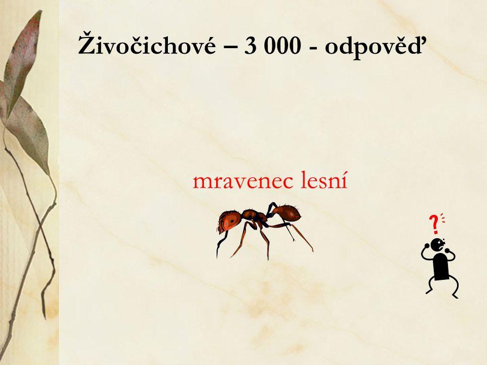 Živočichové – 3 000 - odpověď mravenec lesní