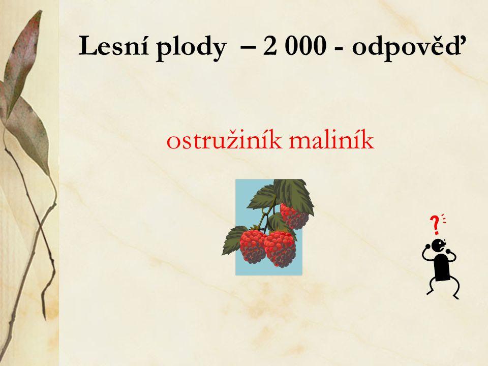 Lesní plody – 2 000 - odpověď ostružiník maliník