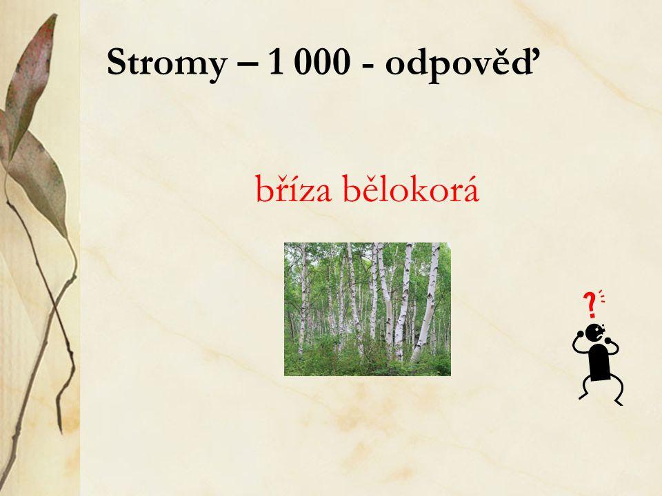 Stromy – 1 000 - odpověď bříza bělokorá