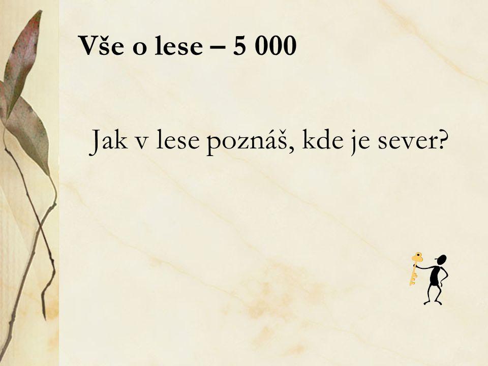 Skrývačky – 4 000 - odpověď Václav Kalista je můj strýček z Prahy.