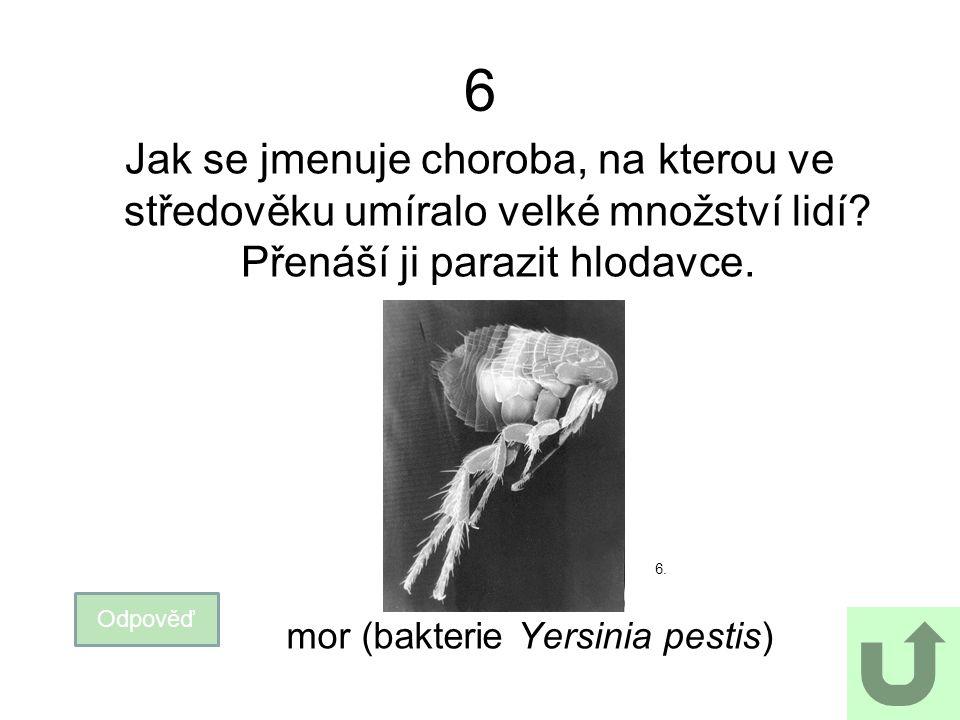 27 Jak se jmenuje nemoc, která se v ČR vyskytuje jen u netopýrů (u dalších savců byla vymýcena).