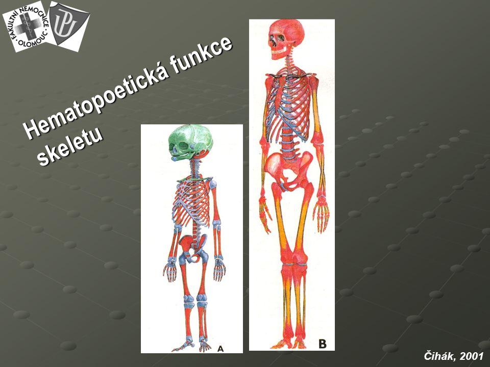 Hematopoetická funkce skeletu Čihák, 2001