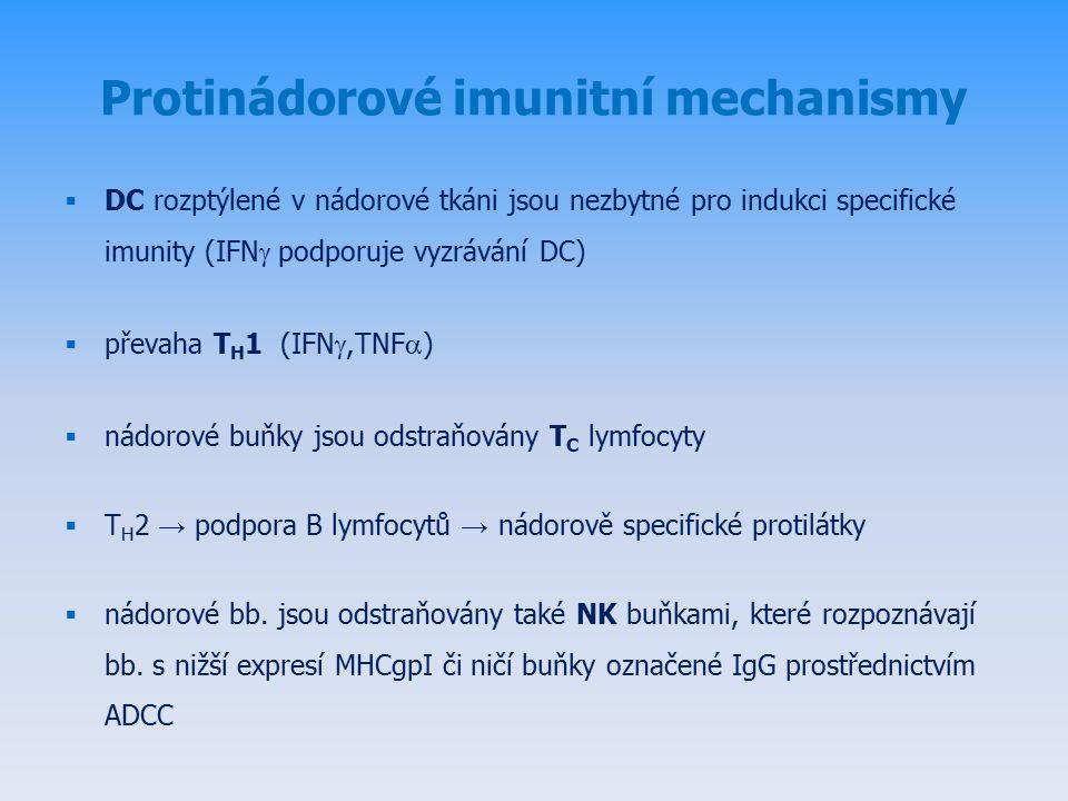 Protinádorové imunitní mechanismy  DC rozptýlené v nádorové tkáni jsou nezbytné pro indukci specifické imunity (IFN  podporuje vyzrávání DC)  převaha T H 1 (IFN ,TNF  )  nádorové buňky jsou odstraňovány T C lymfocyty  T H 2 → podpora B lymfocytů → nádorově specifické protilátky  nádorové bb.