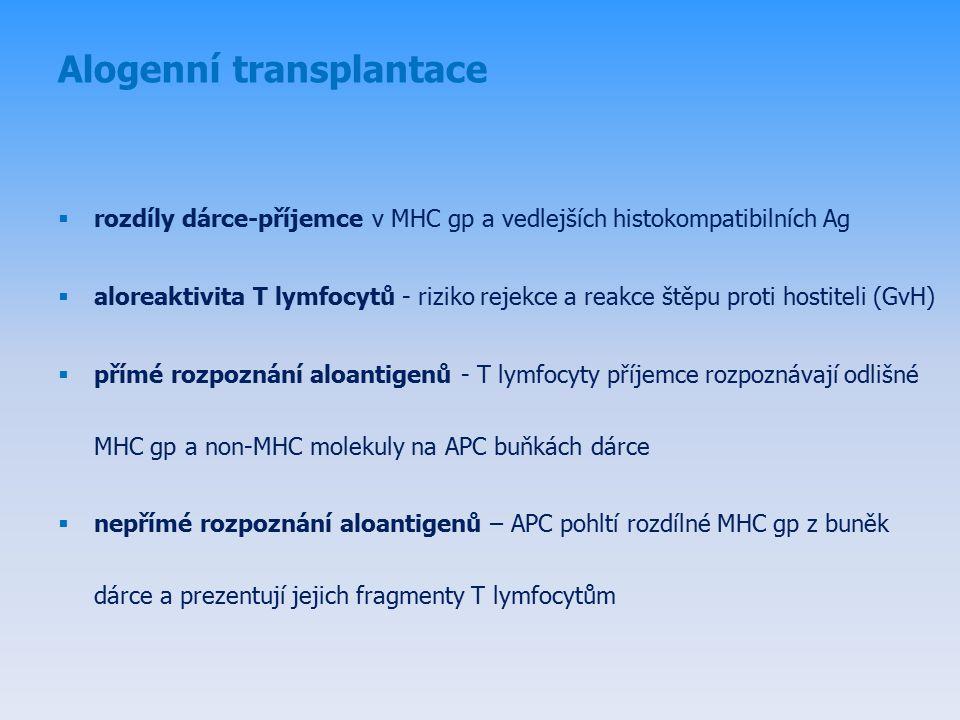 Alogenní transplantace  rozdíly dárce-příjemce v MHC gp a vedlejších histokompatibilních Ag  aloreaktivita T lymfocytů - riziko rejekce a reakce štěpu proti hostiteli (GvH)  přímé rozpoznání aloantigenů - T lymfocyty příjemce rozpoznávají odlišné MHC gp a non-MHC molekuly na APC buňkách dárce  nepřímé rozpoznání aloantigenů – APC pohltí rozdílné MHC gp z buněk dárce a prezentují jejich fragmenty T lymfocytům