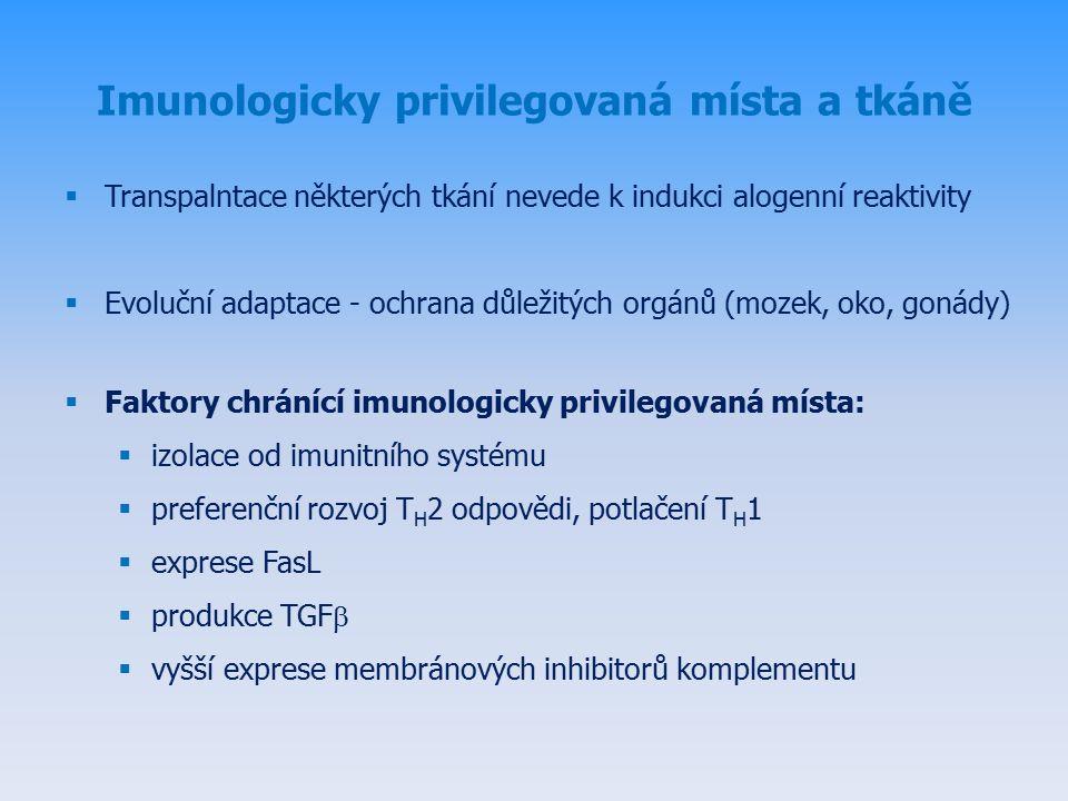 Imunologicky privilegovaná místa a tkáně  Transpalntace některých tkání nevede k indukci alogenní reaktivity  Evoluční adaptace - ochrana důležitých orgánů (mozek, oko, gonády)  Faktory chránící imunologicky privilegovaná místa:  izolace od imunitního systému  preferenční rozvoj T H 2 odpovědi, potlačení T H 1  exprese FasL  produkce TGF   vyšší exprese membránových inhibitorů komplementu
