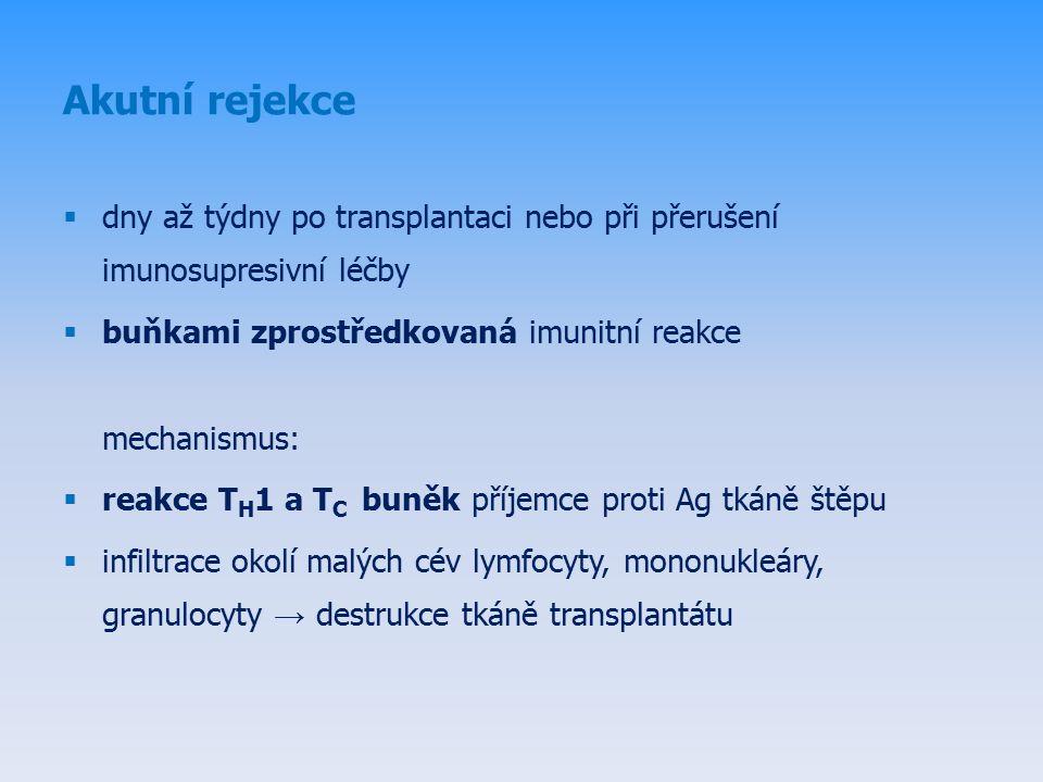 Akutní rejekce  dny až týdny po transplantaci nebo při přerušení imunosupresivní léčby  buňkami zprostředkovaná imunitní reakce mechanismus:  reakce T H 1 a T C buněk příjemce proti Ag tkáně štěpu  infiltrace okolí malých cév lymfocyty, mononukleáry, granulocyty → destrukce tkáně transplantátu