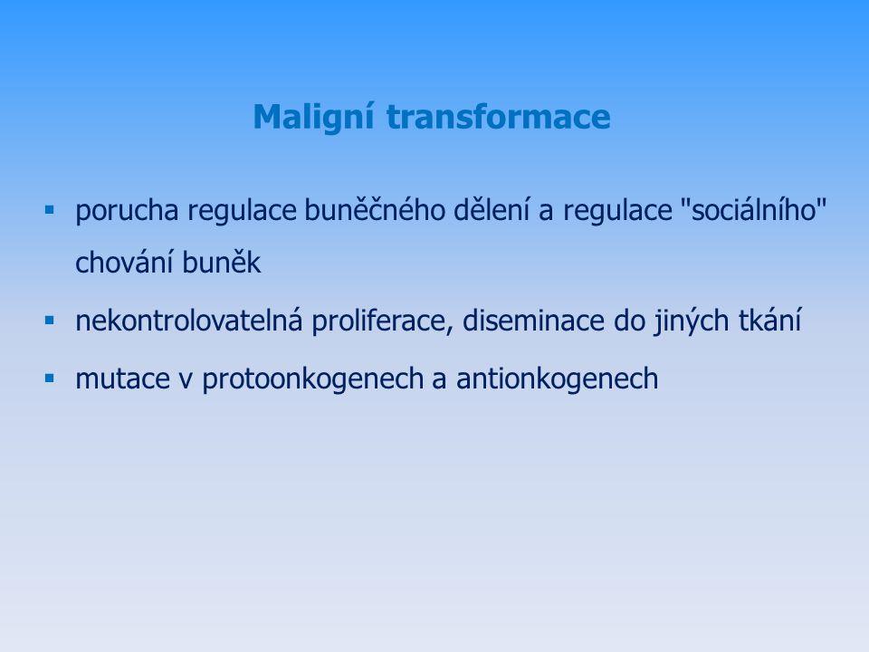 Maligní transformace  porucha regulace buněčného dělení a regulace sociálního chování buněk  nekontrolovatelná proliferace, diseminace do jiných tkání  mutace v protoonkogenech a antionkogenech