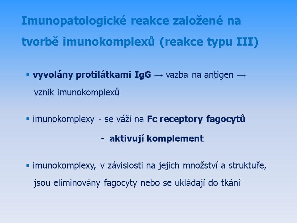  vyvolány protilátkami IgG → vazba na antigen → vznik imunokomplexů  imunokomplexy - se váží na Fc receptory fagocytů - aktivují komplement  imunokomplexy, v závislosti na jejich množství a struktuře, jsou eliminovány fagocyty nebo se ukládají do tkání Imunopatologické reakce založené na tvorbě imunokomplexů (reakce typu III)