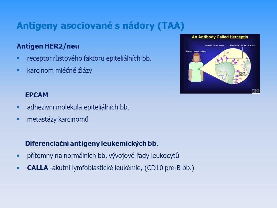 Antigeny asociované s nádory (TAA) Antigen HER2/neu  receptor růstového faktoru epiteliálních bb.