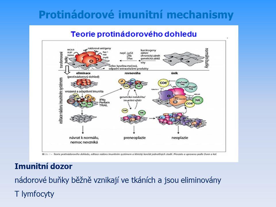 Protinádorové imunitní mechanismy Imunitní dozor nádorové buňky běžně vznikají ve tkáních a jsou eliminovány T lymfocyty