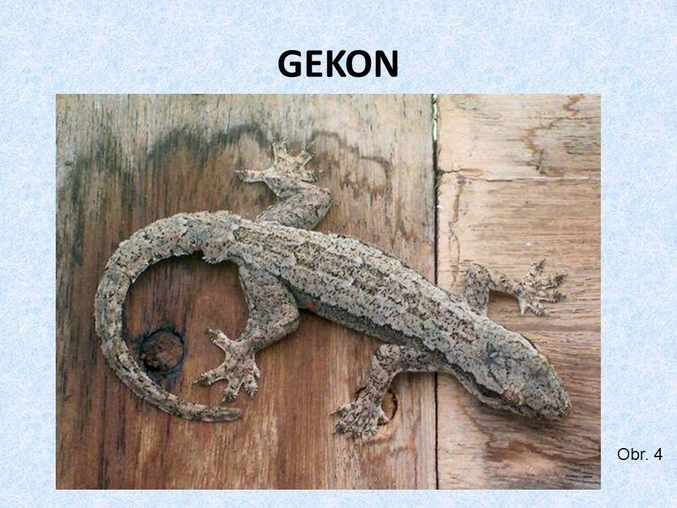 GEKON Obr. 4