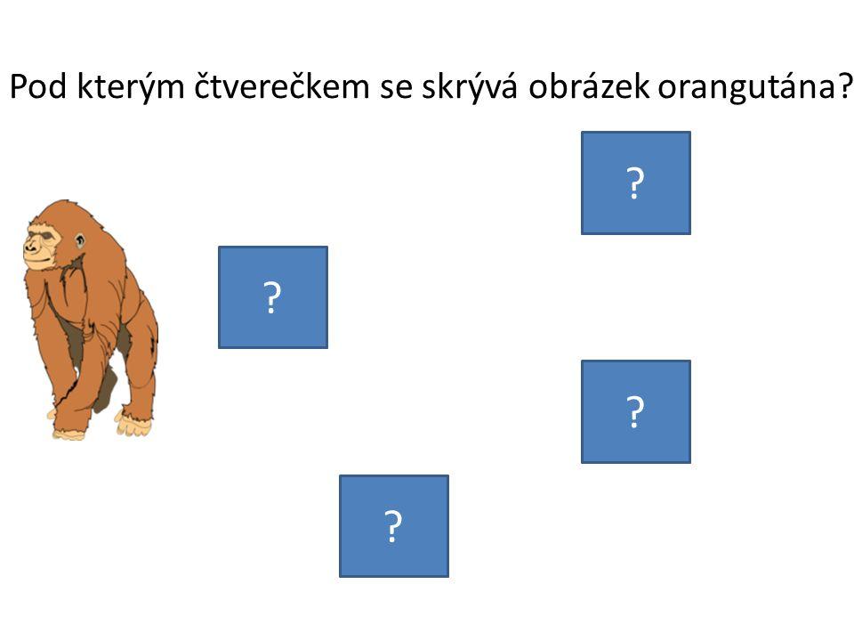 Pod kterým čtverečkem se skrývá obrázek orangutána? ? ? ? ?