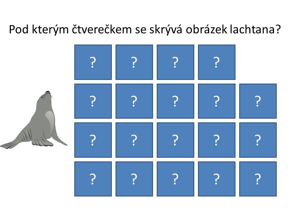 Pod kterým čtverečkem se skrývá obrázek lachtana? ???? ????? ????? ?????