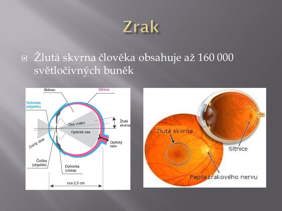  Žlutá skvrna člověka obsahuje až 160 000 světločivných buněk