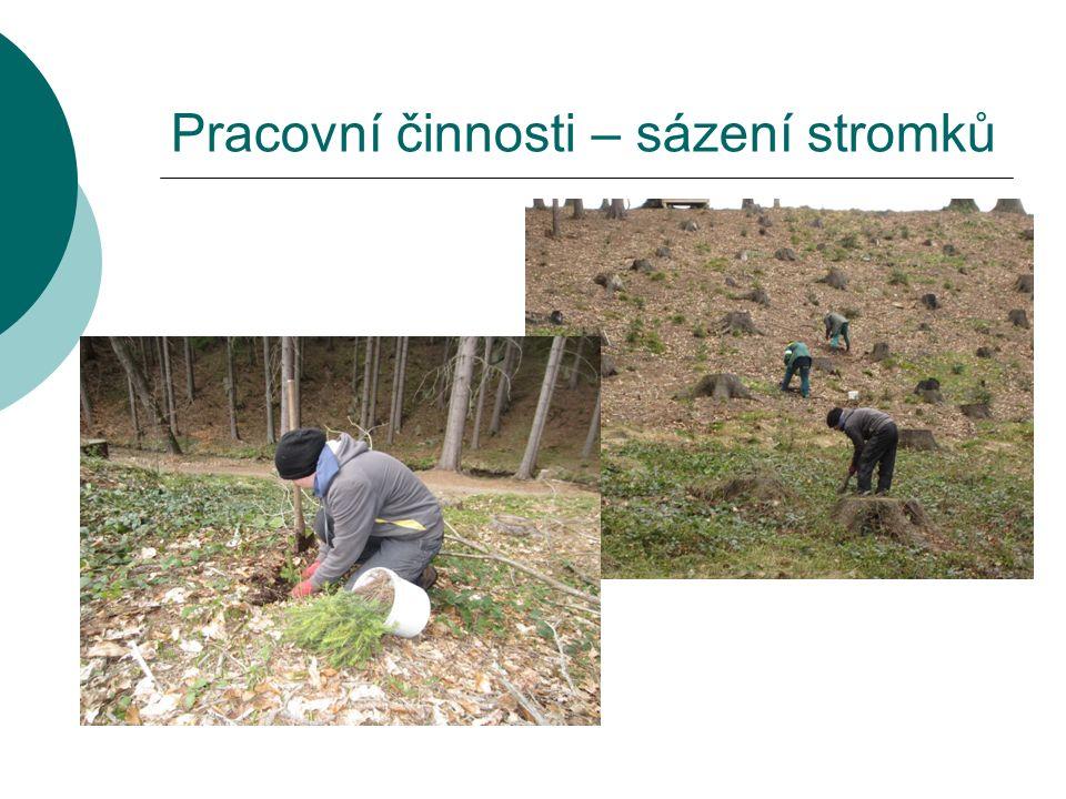 Pracovní činnosti – sázení stromků