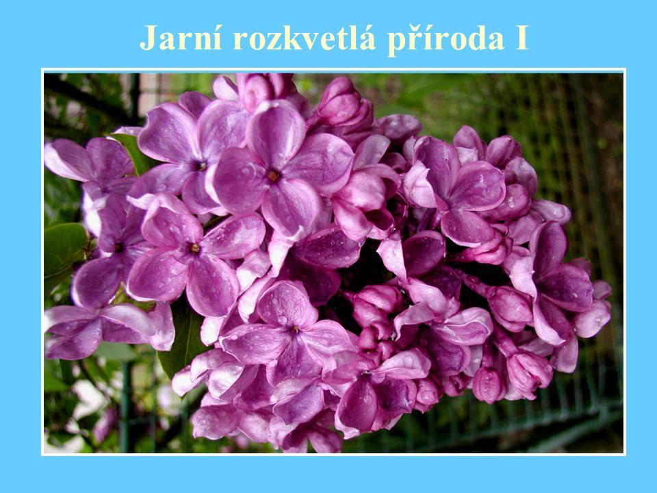 Jarní rozkvetlá příroda I