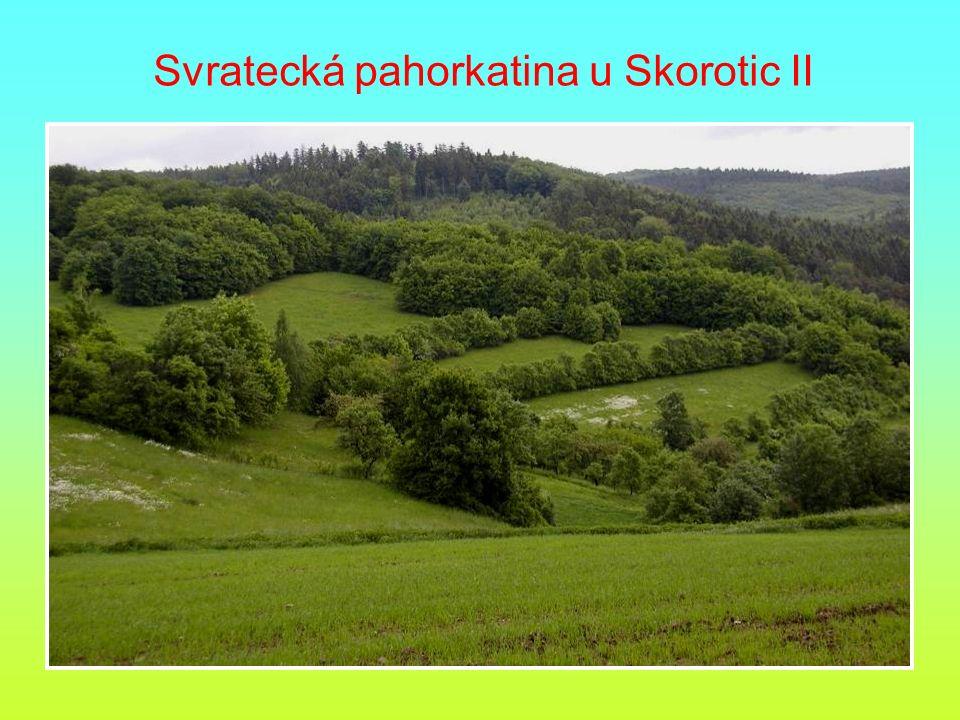 Svratecká pahorkatina u Skorotic II