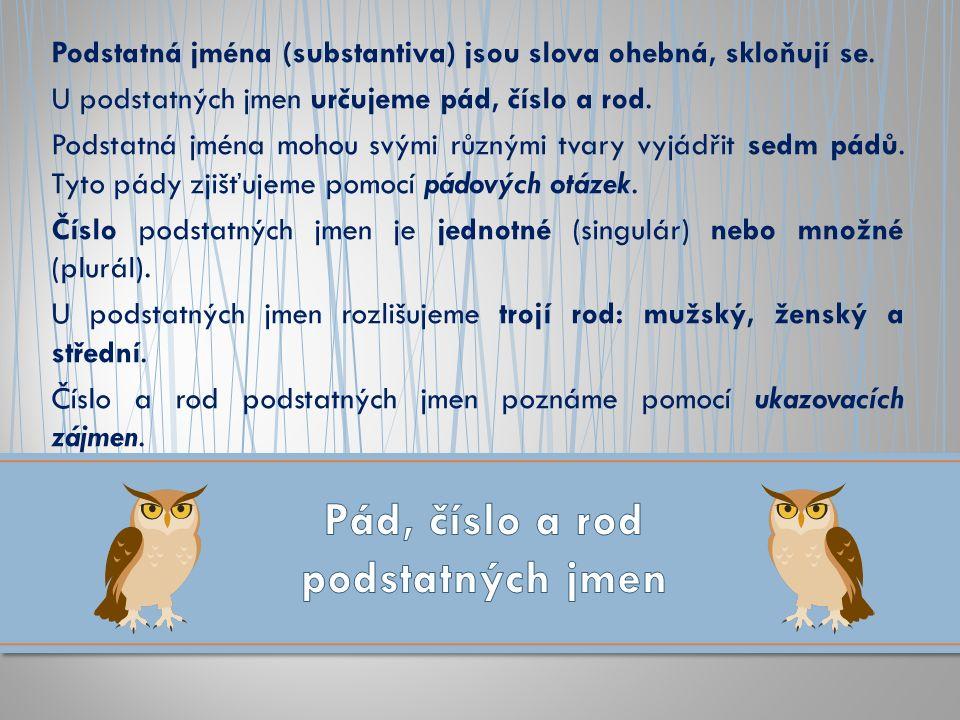 Podstatná jména (substantiva) jsou slova ohebná, skloňují se. U podstatných jmen určujeme pád, číslo a rod. Podstatná jména mohou svými různými tvary