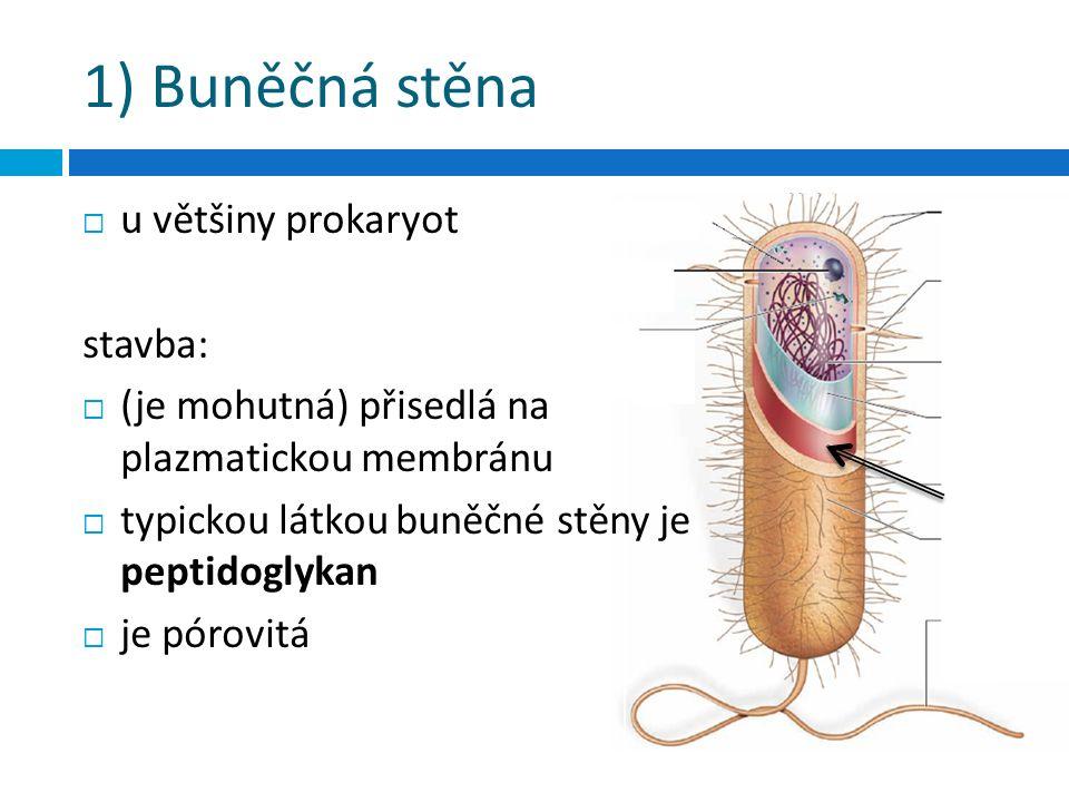 1) Buněčná stěna  u většiny prokaryot stavba:  (je mohutná) přisedlá na plazmatickou membránu  typickou látkou buněčné stěny je peptidoglykan  je pórovitá