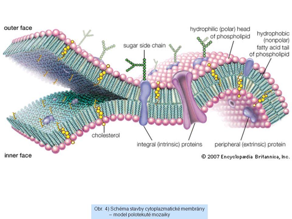 Obr. 4) Schéma stavby cytoplazmatické membrány – model polotekuté mozaiky