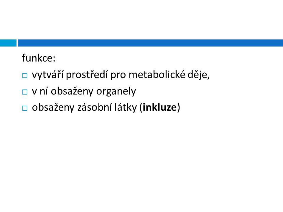 funkce:  vytváří prostředí pro metabolické děje,  v ní obsaženy organely  obsaženy zásobní látky (inkluze)