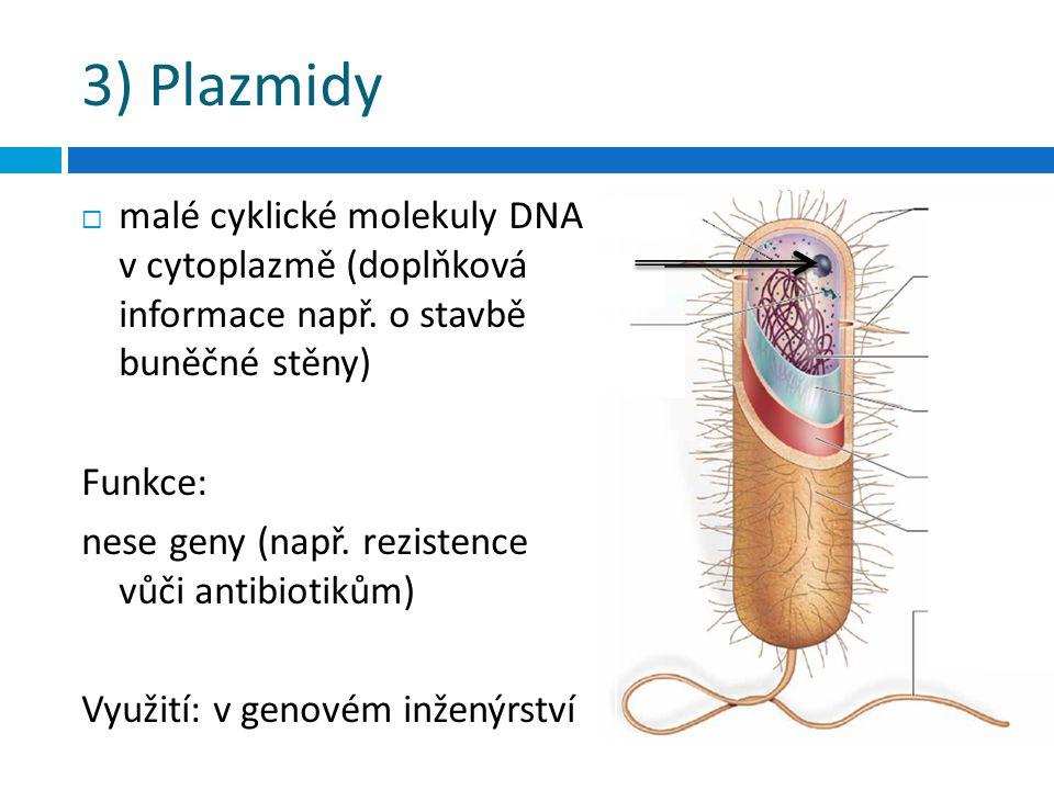 3) Plazmidy  malé cyklické molekuly DNA v cytoplazmě (doplňková informace např.