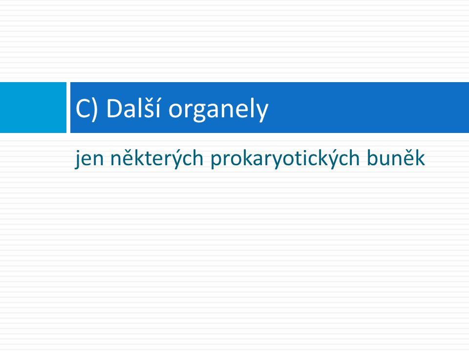 jen některých prokaryotických buněk C) Další organely