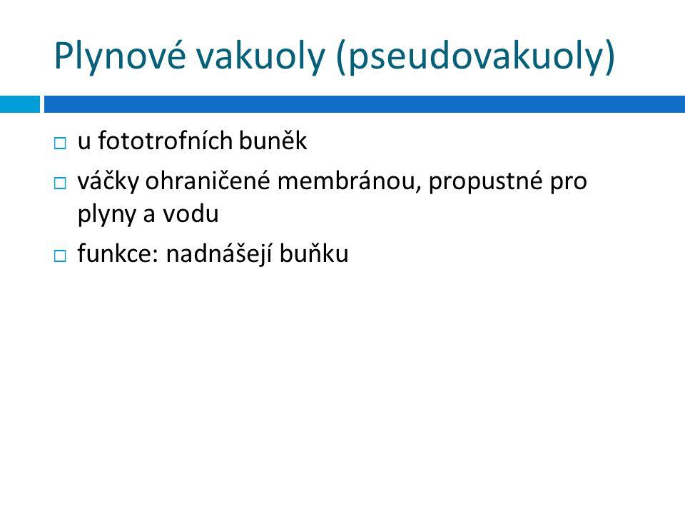 Plynové vakuoly (pseudovakuoly)  u fototrofních buněk  váčky ohraničené membránou, propustné pro plyny a vodu  funkce: nadnášejí buňku
